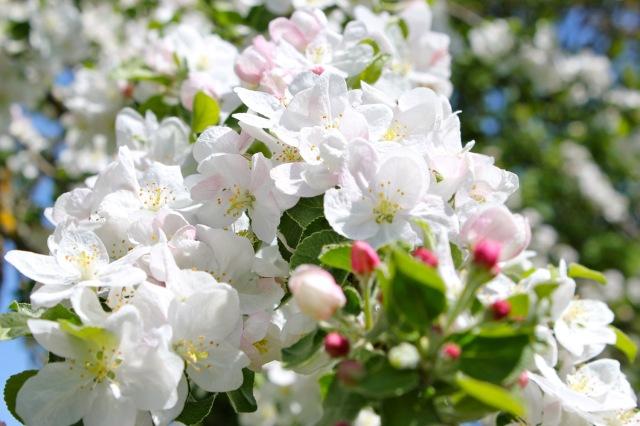Frühling_4070