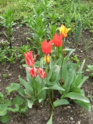 Frühling_0084