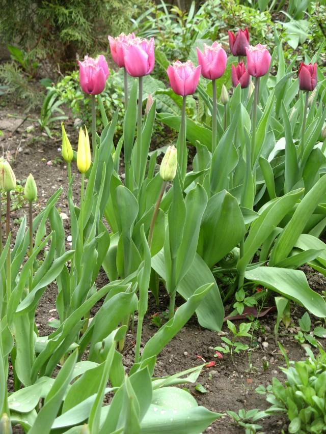 Frühling_0085