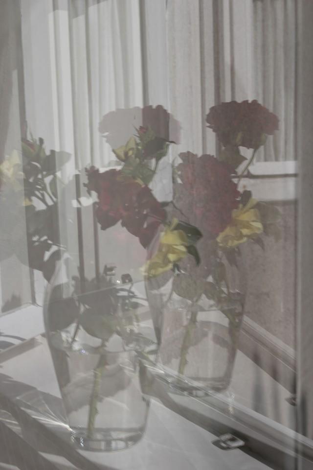 Renate Egger. Roses