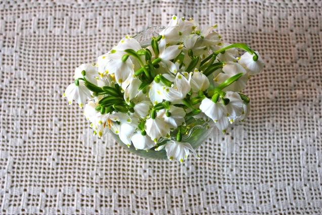 Frühlingsknotenblume_5777