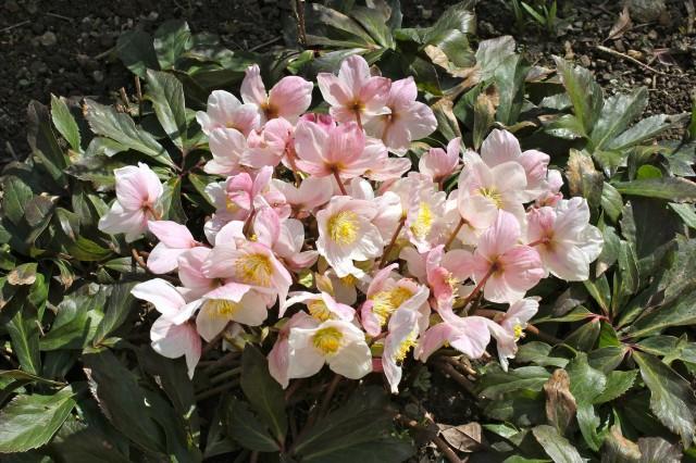 Frühling_5901