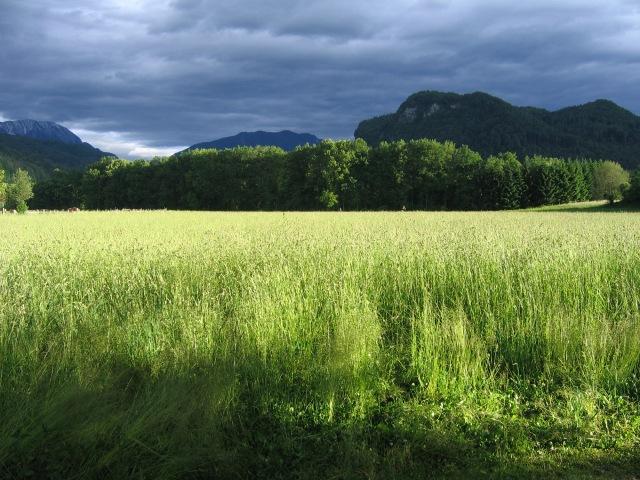Landschaft Carinthia/Austria