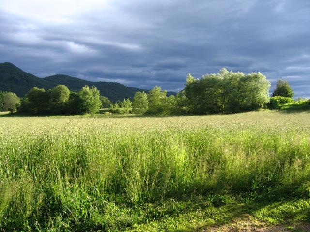 Landscape Carinthia/Austia