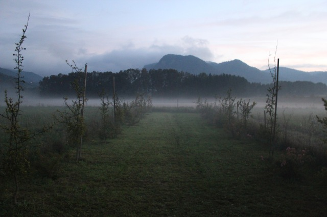 Landschaftsgarten_6701
