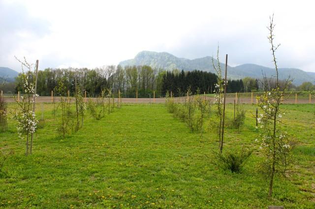Landschaftsgarten_7687
