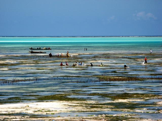 Zanzibar_1053-kopie
