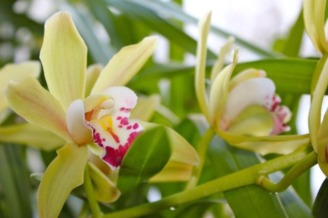 Orchideen_5595