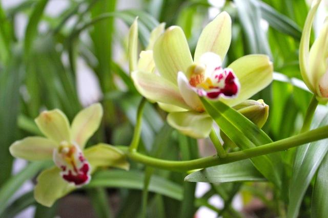 Orchideen_5547