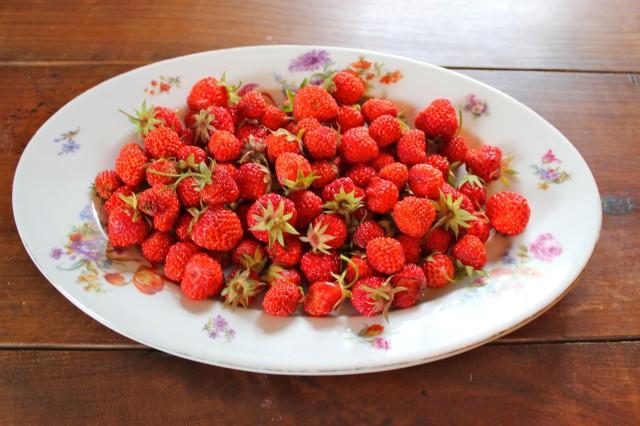 Erdbeeren_7880