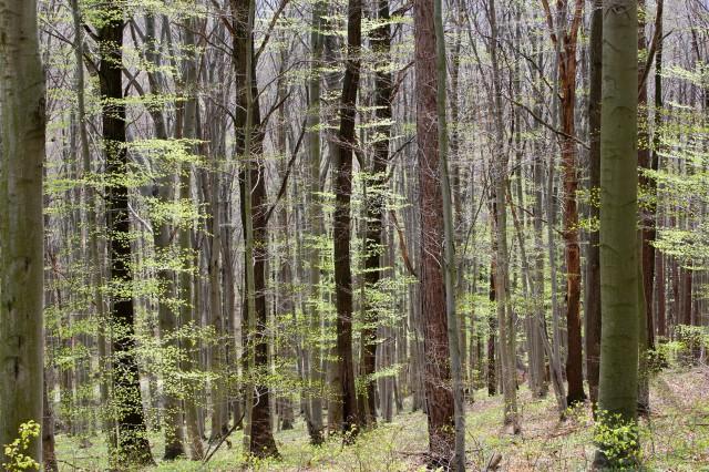 Im Wald_3982