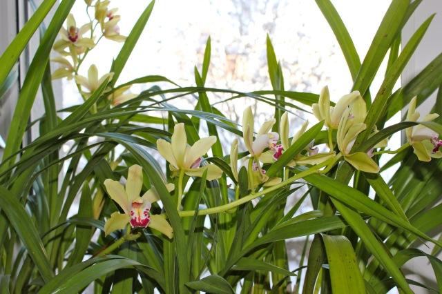 Orchideen5598