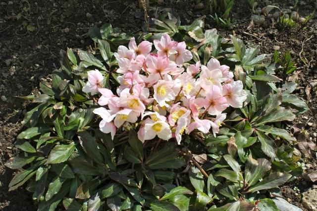 Frühling_5900