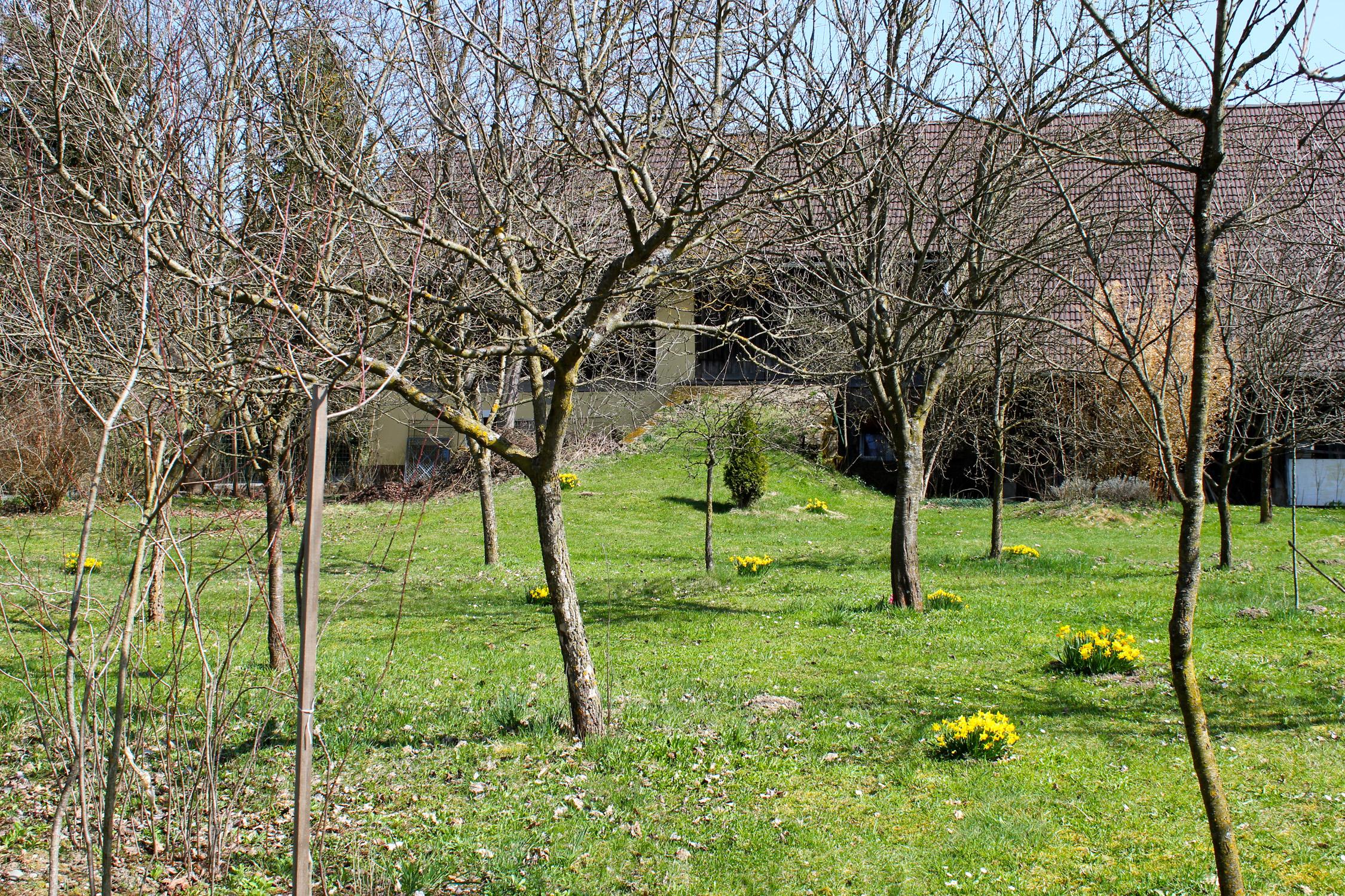 Obstgarten_8701