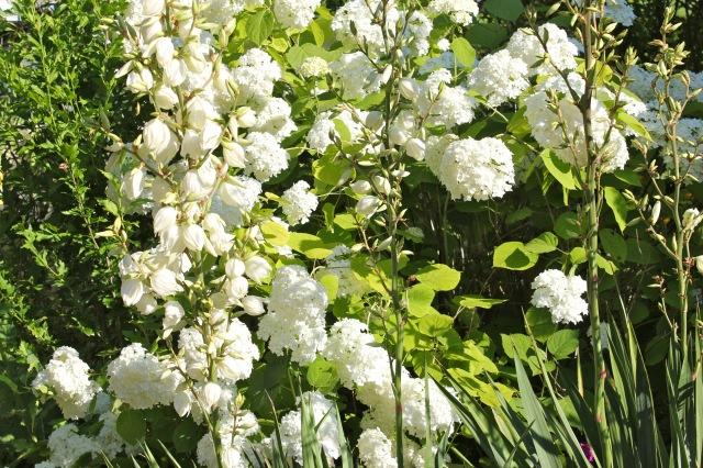 Blumen_0460
