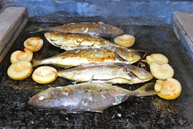Fische 19_0779