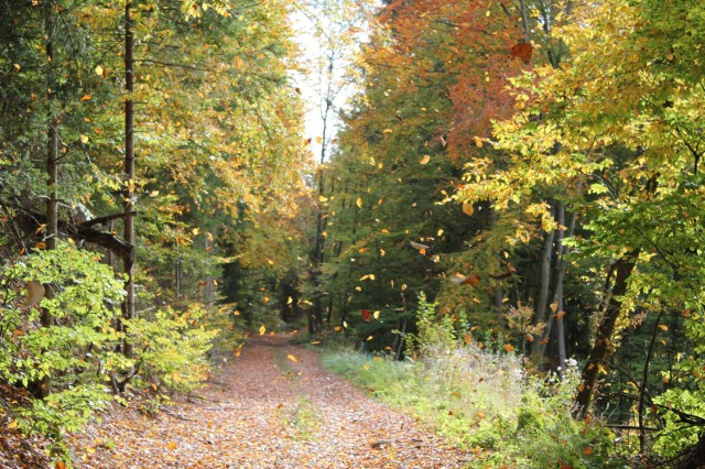 Herbst_1033 2