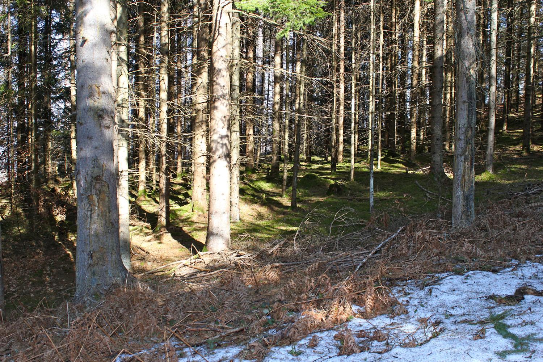Im Wald_9884