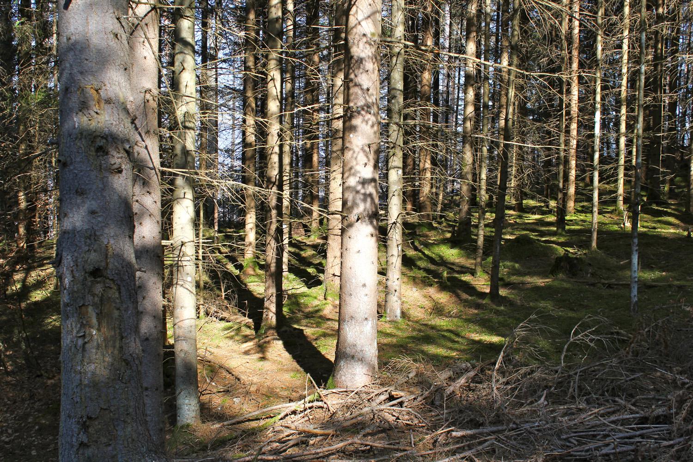 Im Wald_9885