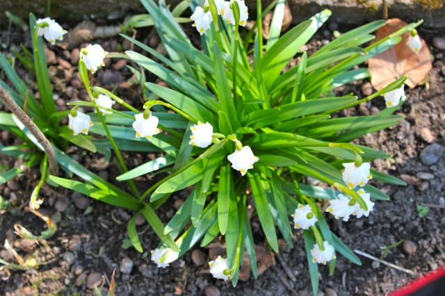 Frühjahr 20_1500