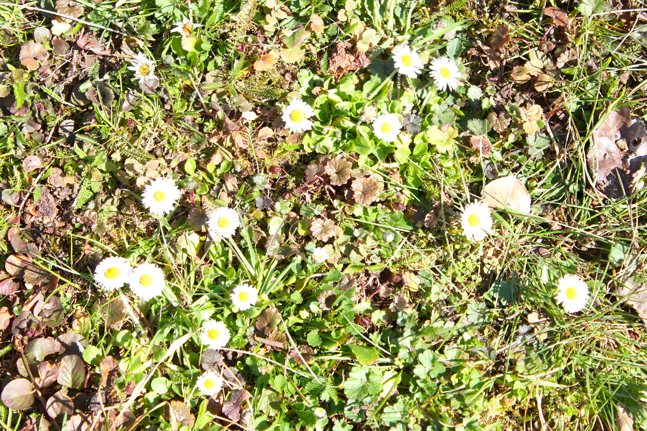 Frühjahr 20_1506
