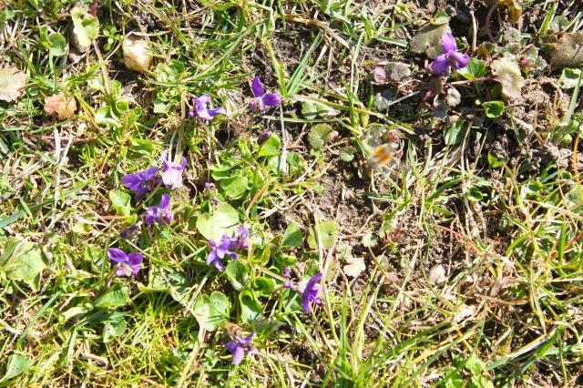 Frühjahr 20_1507