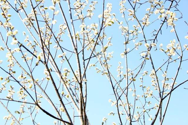 Frühling 20_1508