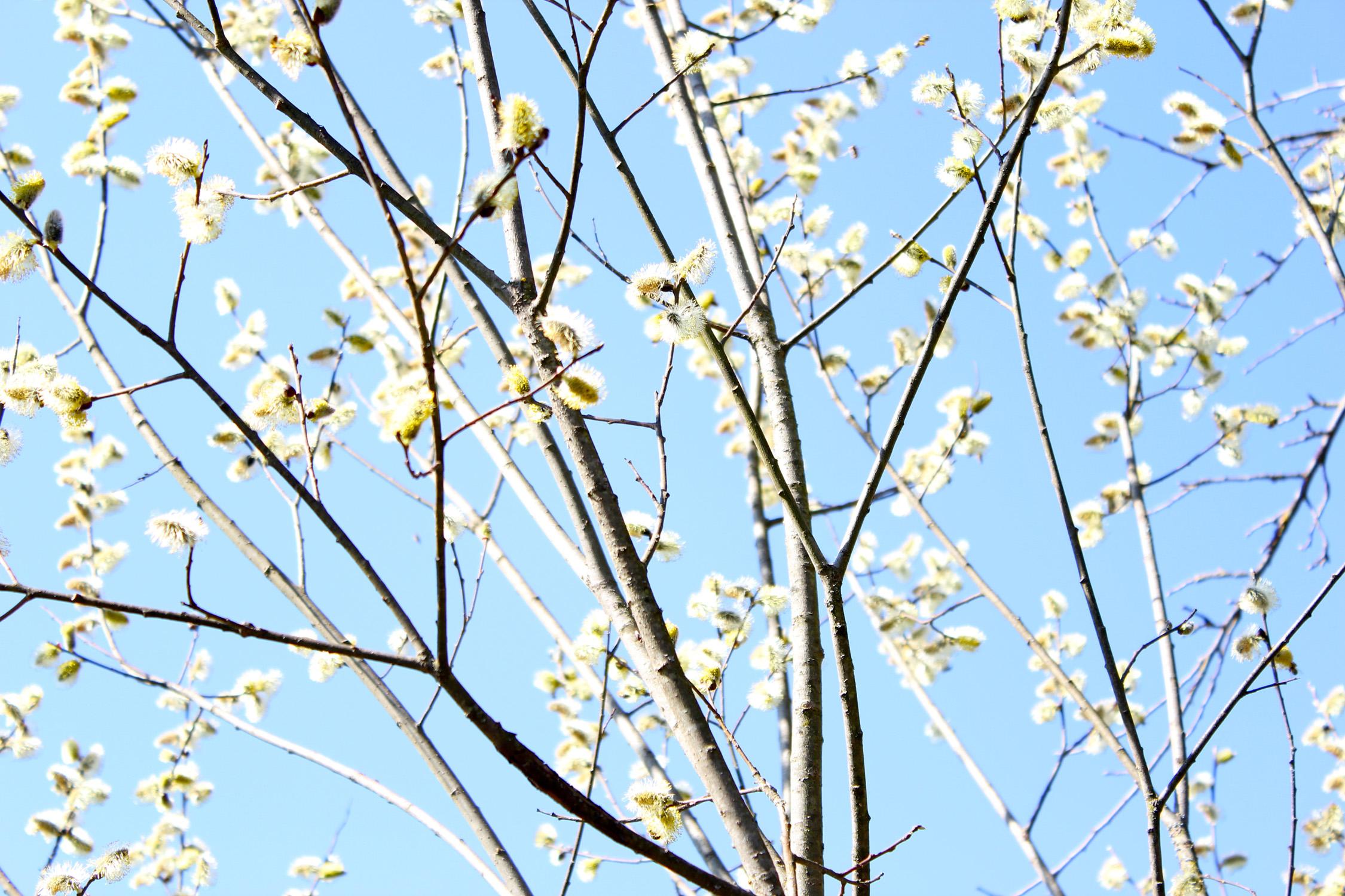 Frühling 20_1509