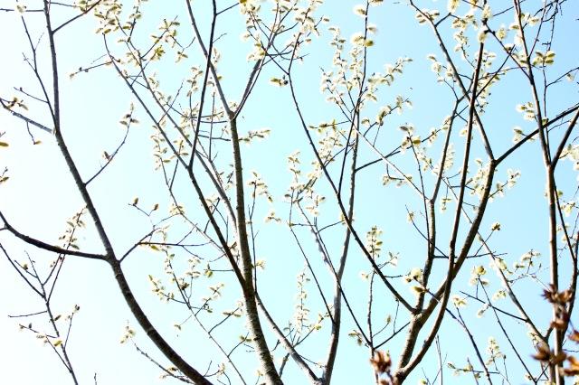 Frühling 20_1510
