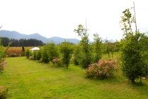 Landschaftsgarten_2178