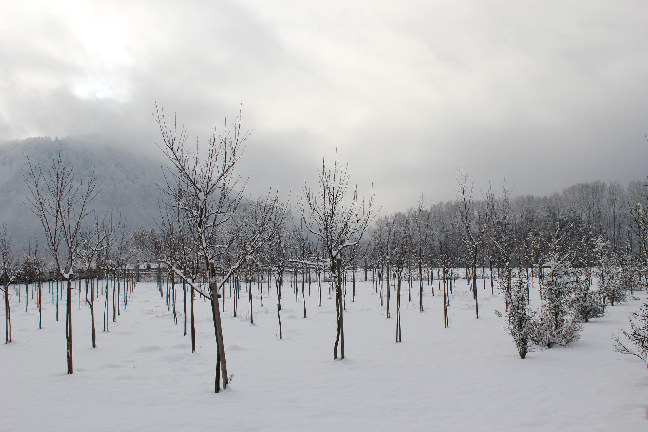 Winter_1166