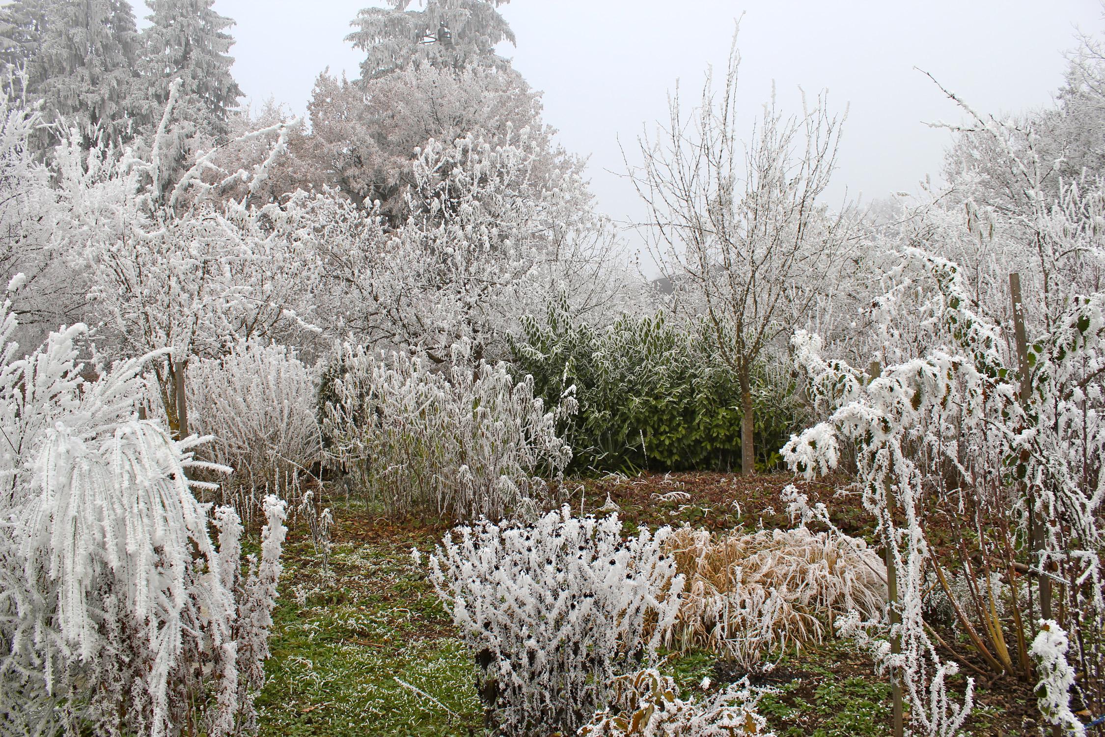 Winter_2361