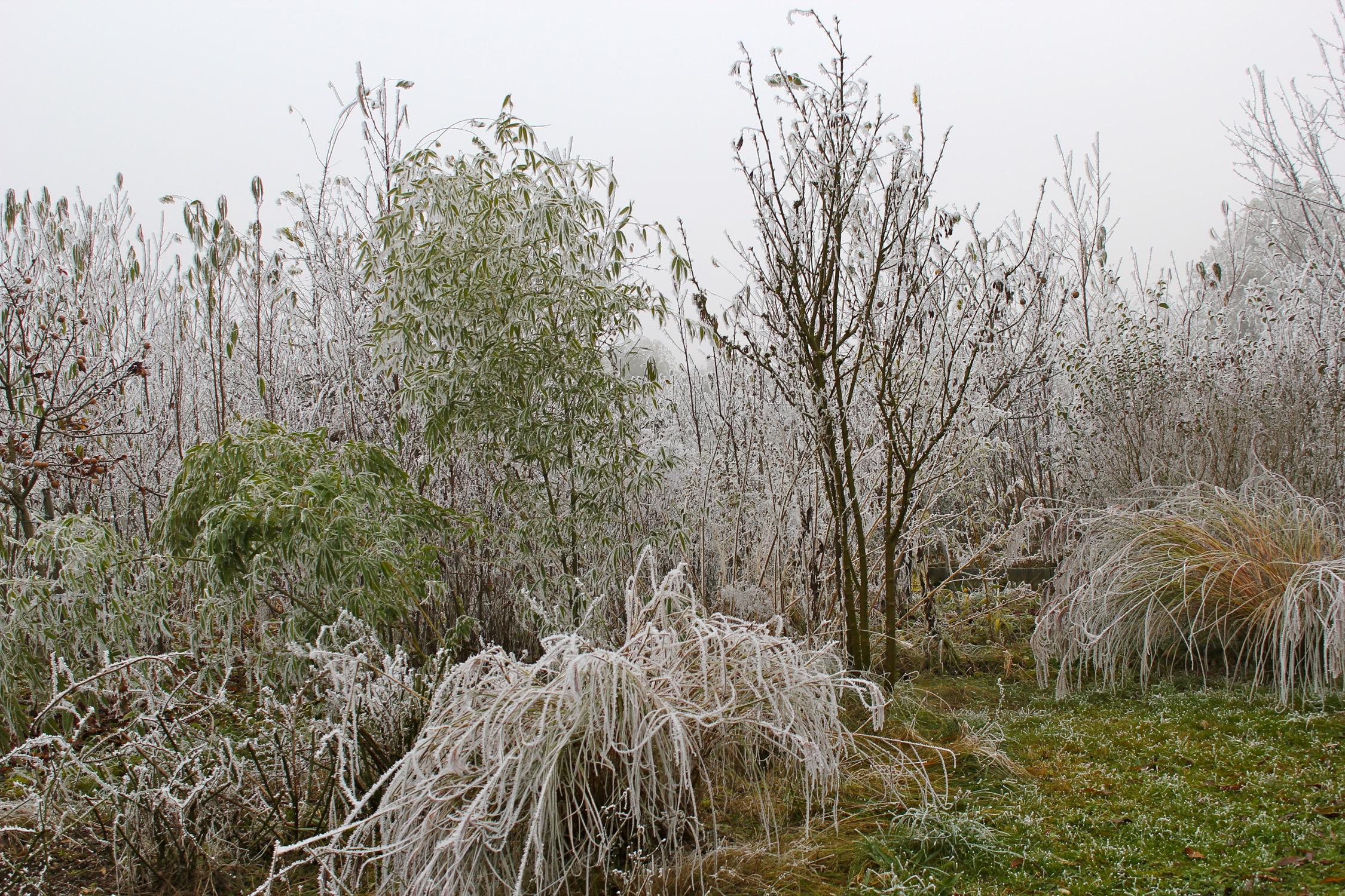 Winter_2371