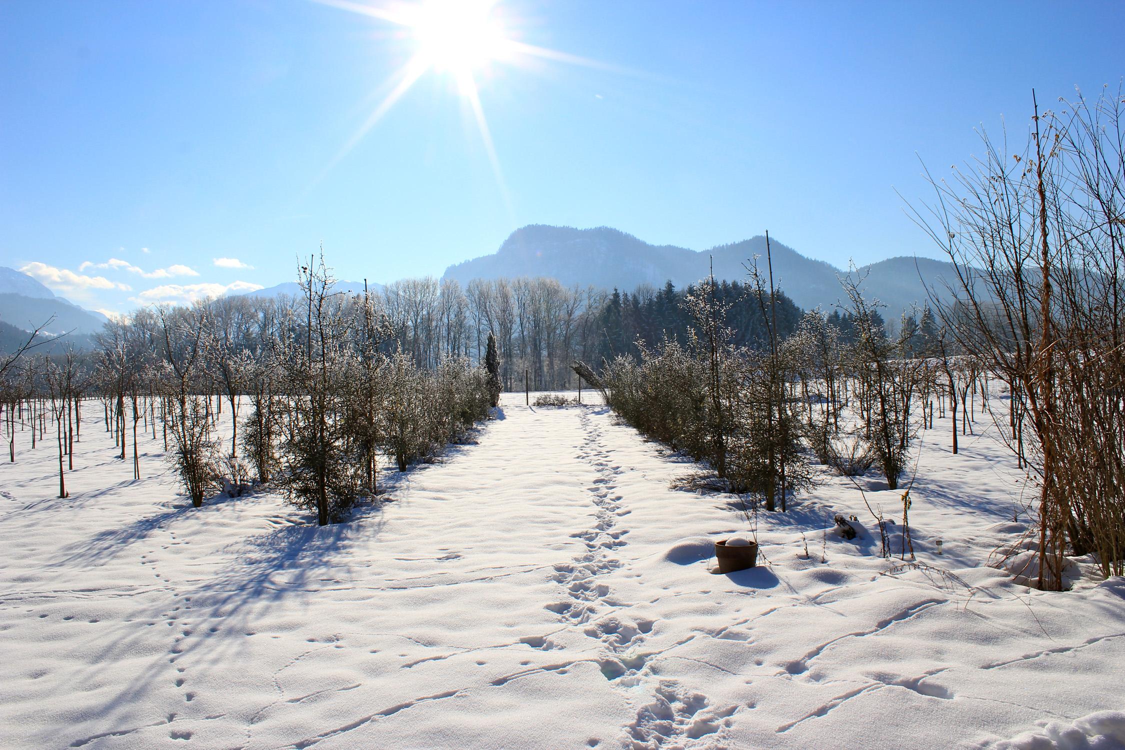 Winter_2478